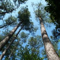 Timber & Forestry Products