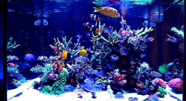 Saltwater Aquarium Setup | Mad Hatter's Reef