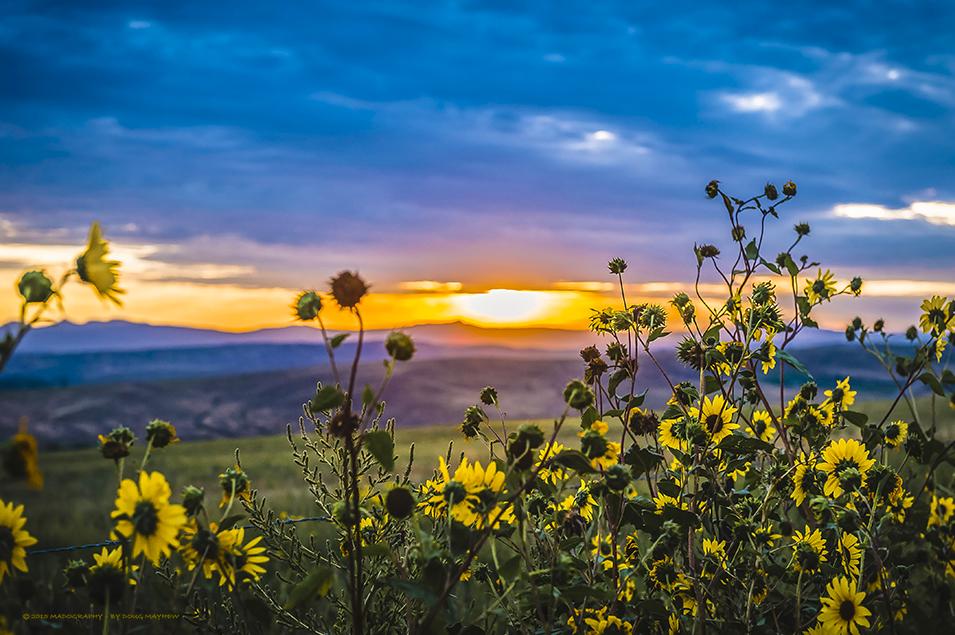 Fall Mountain Lake Wallpaper Colorado Sunrise Over Rocky Mountain Wild Sunflowers