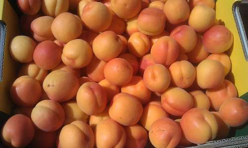 fresh apricots in a box