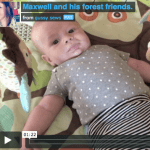 {Maxwell and his forest friends.}