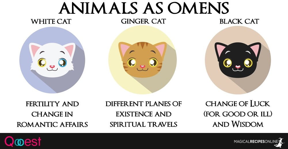 10 Animals as Omens when they cross your path - Magical Recipes Online