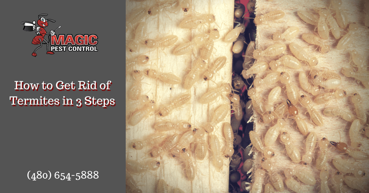 How to Get Rid of Termites in 3 Steps