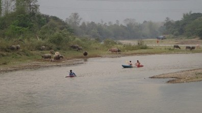 Vang Vieng Kayaking and Buffalos