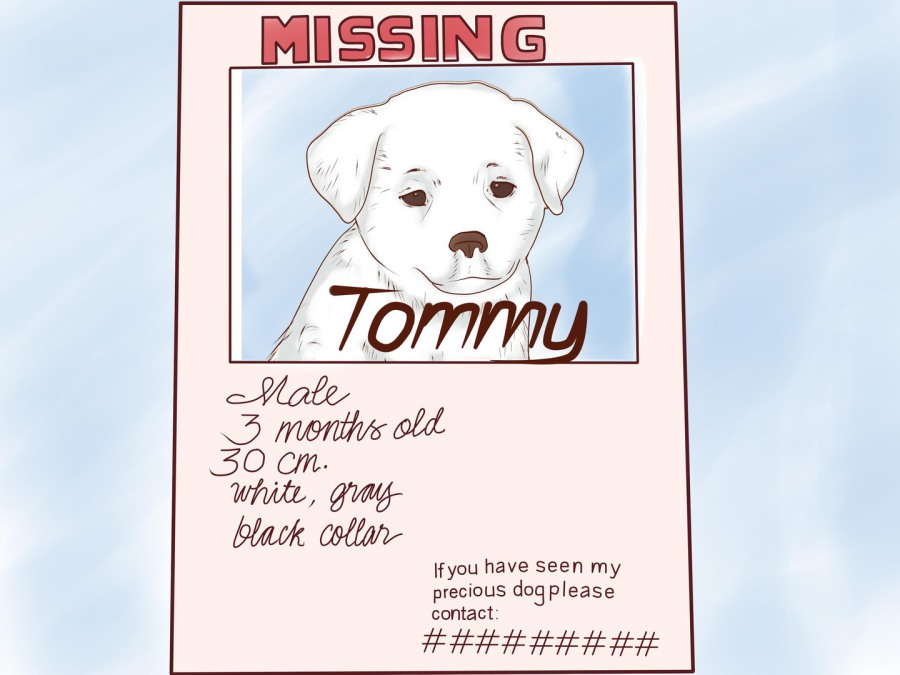 missing dog posters template - Minimfagency