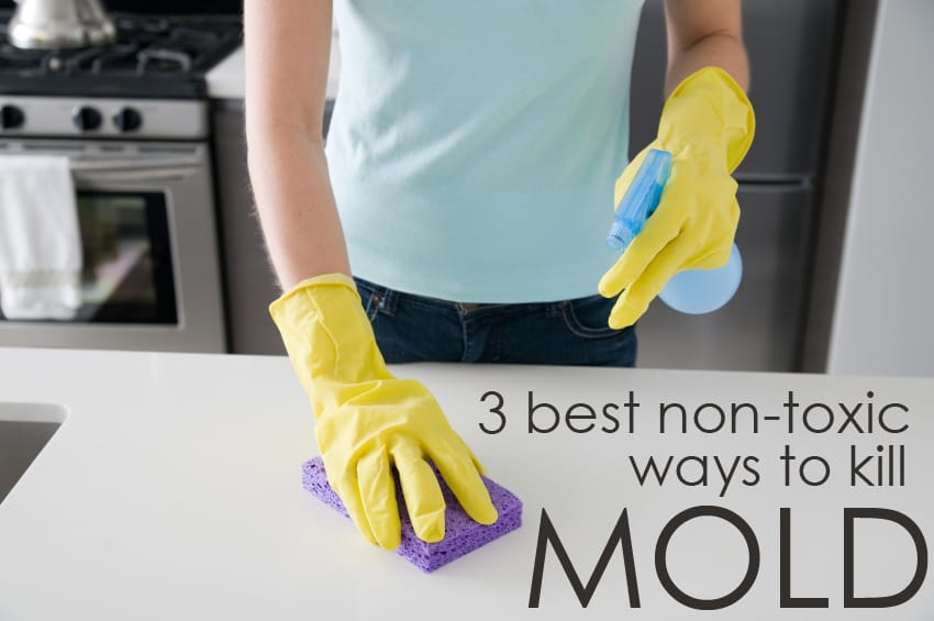 3 Non-Toxic Ways to Clean Mold - The Maids Blog | The Maids Blog