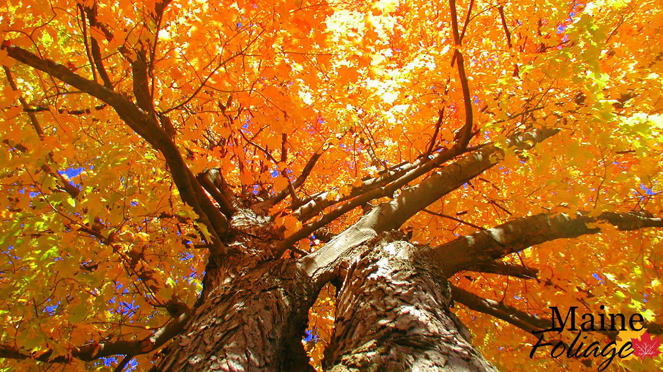 Fall Vermont Wallpaper Mainefoliage Com Photo Gallery Foliage Wallpaper