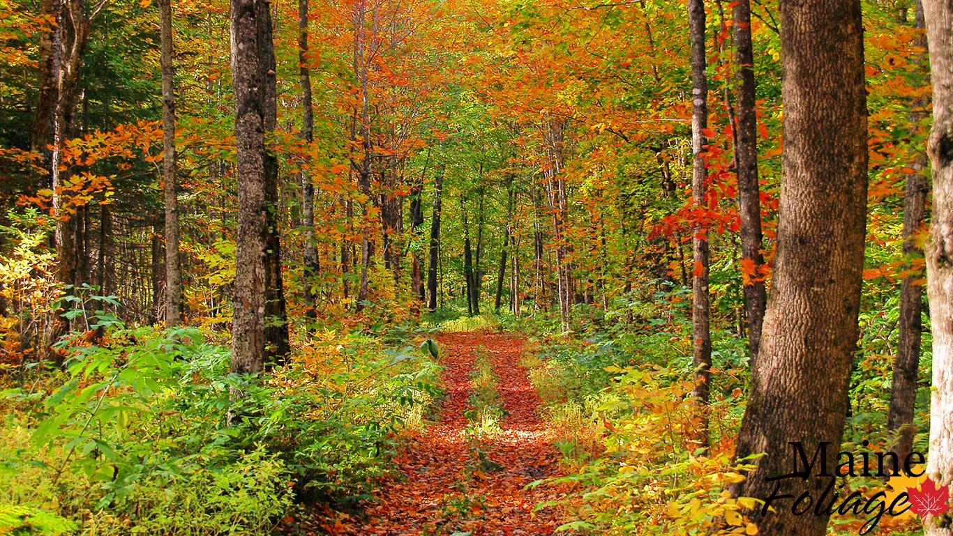 Maine Fall Foliage Wallpaper Mainefoliage Com Photo Gallery Foliage Wallpaper