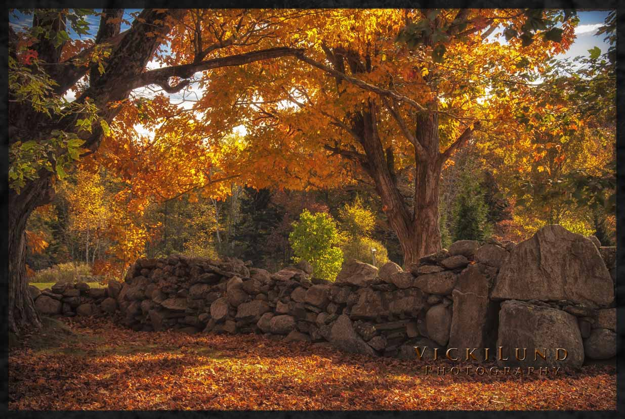 Maine Fall Wallpaper Mainefoliage Com Photo Gallery The Best Of The Years Past