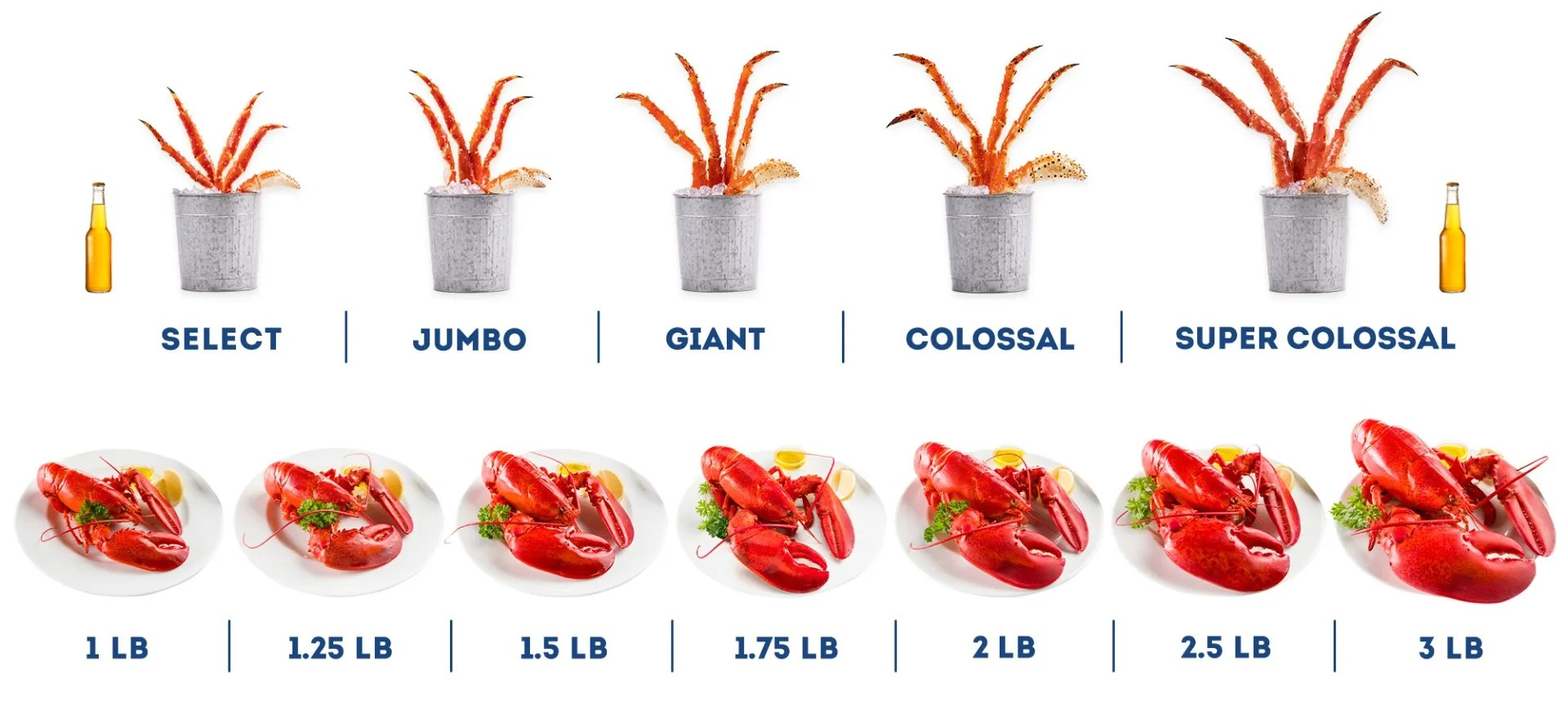 JUMBO Live Lobsters GIANT Lobsters For Sale Online Maine Lobster Now - lobster customer service