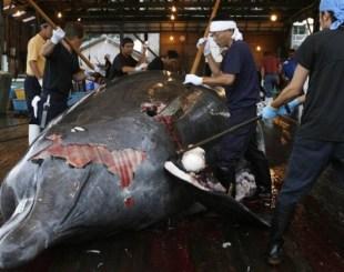 baleia-1