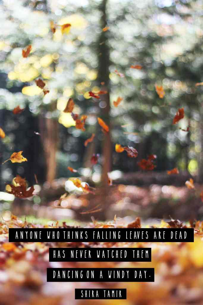 """""""Anyone who thinks falling leaves are dead has never watched them dancing on a windy day.""""- Fall Quote"""