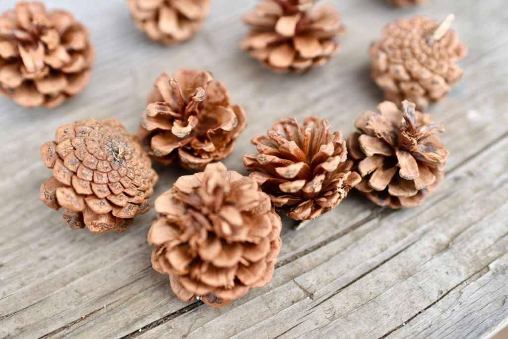 Pinecone ornament tutorial