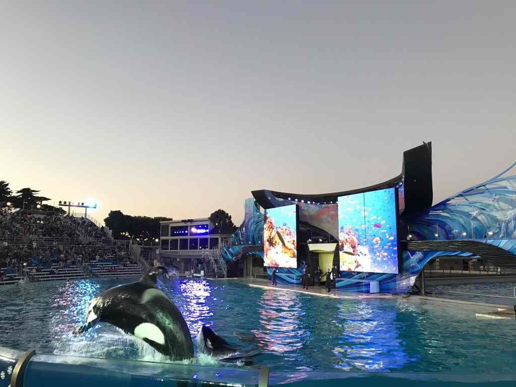 Shamu show at Sea World San Diego