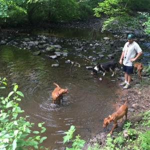 Hiking with the dogs this mourning vizsla Trail dogsofinstagram americankennelclubhellip