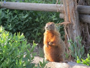 How much wood could a woodchuck chuck If a woodchuckhellip