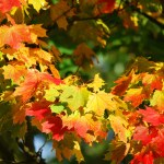 Autumn Equinox – The Changing Season