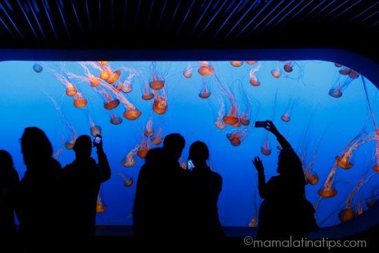 Jelly Fish at Monterey Aquarium - mamalatinatips.com
