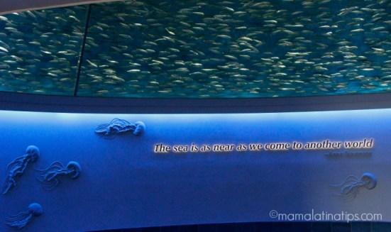 Monterey Aquarium - mamalatinatips.com