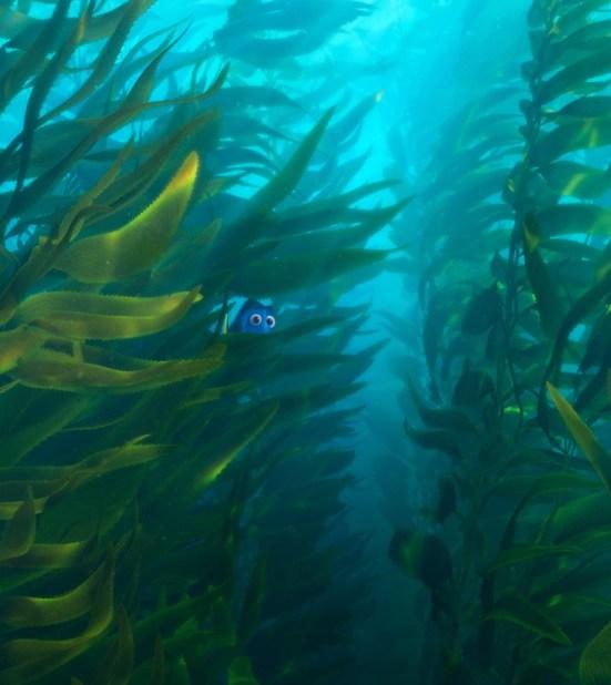 Finding Dory - kelp
