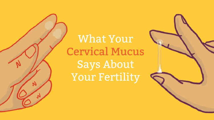 Cervical Mucus Chart Know When You\u0027re Fertile Mama Natural