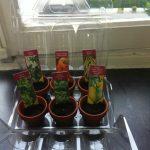 atelier.jardinage.2