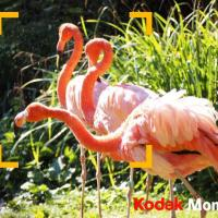 Mon KODAK MOMENT