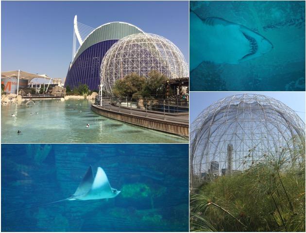 aquarium_Valencia