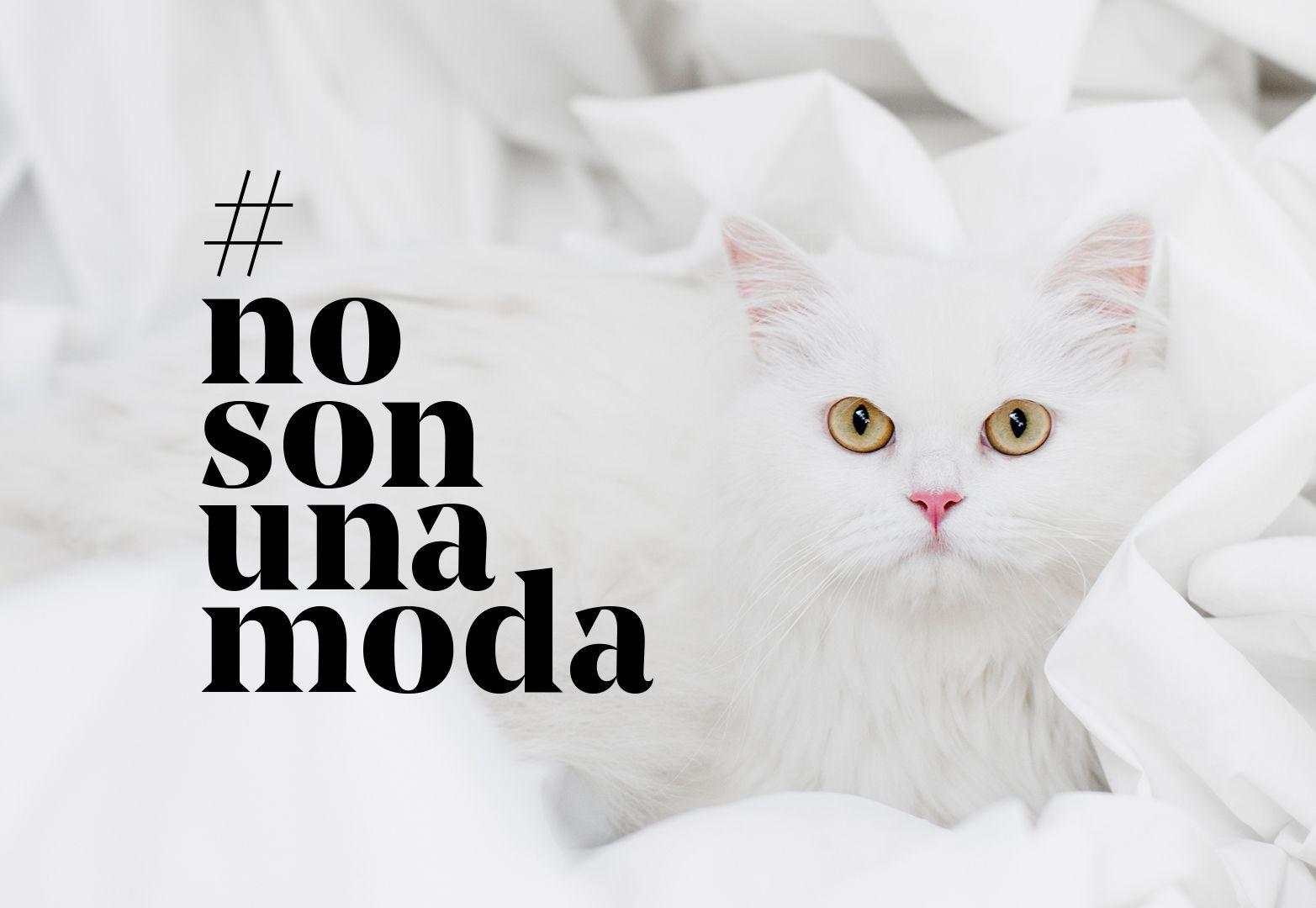 nosonunamodafundacion-affinity