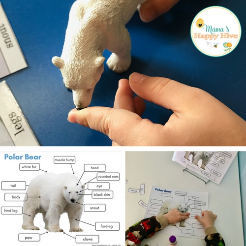 Montessori Arctic Activities and Printables including Polar Bears