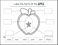 Apple Life Cycle Printable Packet - Mamas Learning Corner