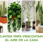 10 plantas que debes tener en tu casa
