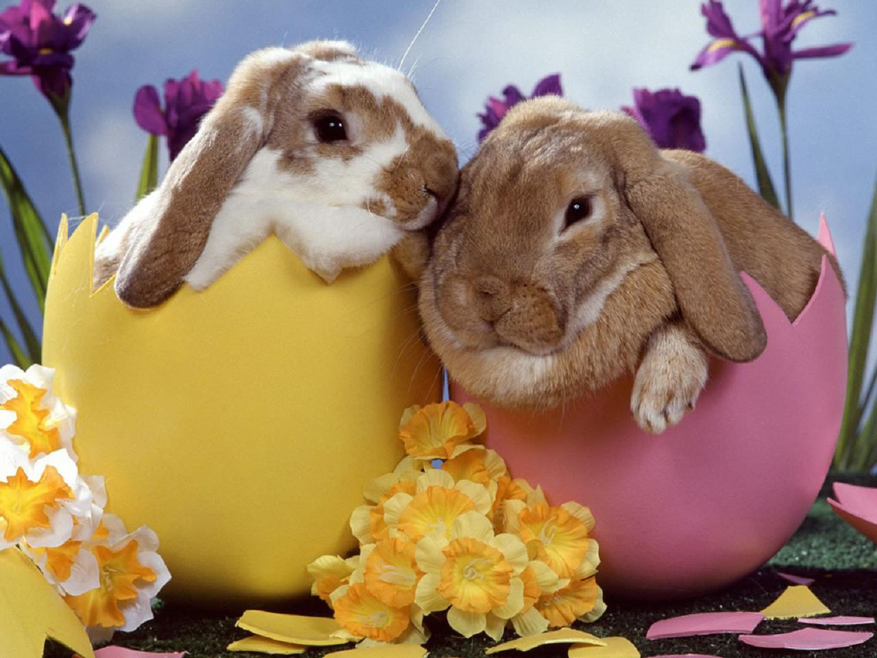 Fullsize Of Easter Bunny Pictures
