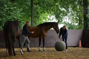 ponykamp 2015 (48)
