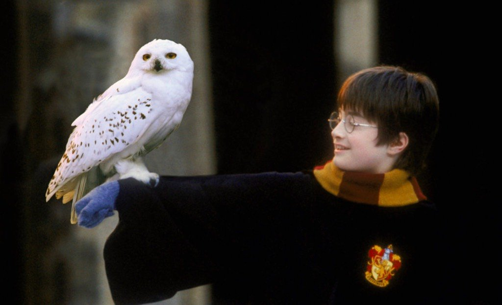Harry Potter: ecco il cast definitivo del sequel