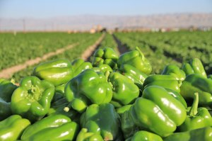 green-peppers11_lg