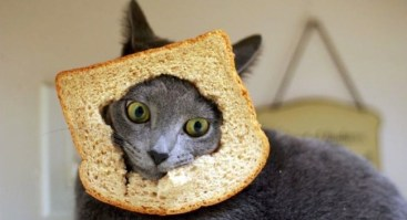 breading-meme