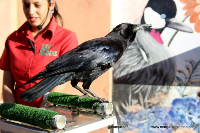 'Flights of Fantasy', Bird show at Monte Casino Birds Garden