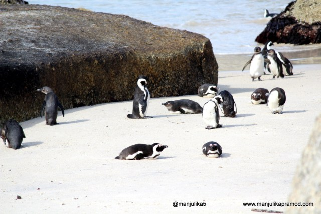 Penguins Colony, Boulders Beach, Cape Town