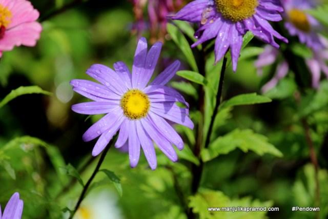 Flower Postcards from BHUTAN (14)