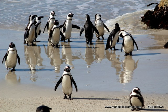 Where to find Penguins in Cape Town