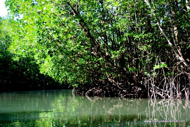 Mangrove ecosystem in Koh Chang
