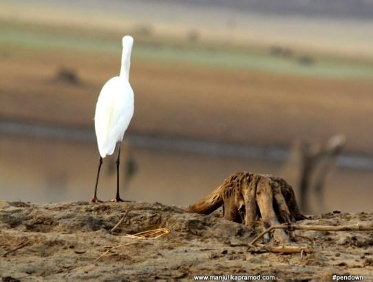 For Bird-watching or Birding, You Must Visit Kabini