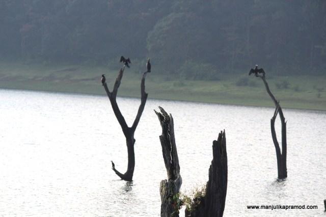 Birds in Periyar