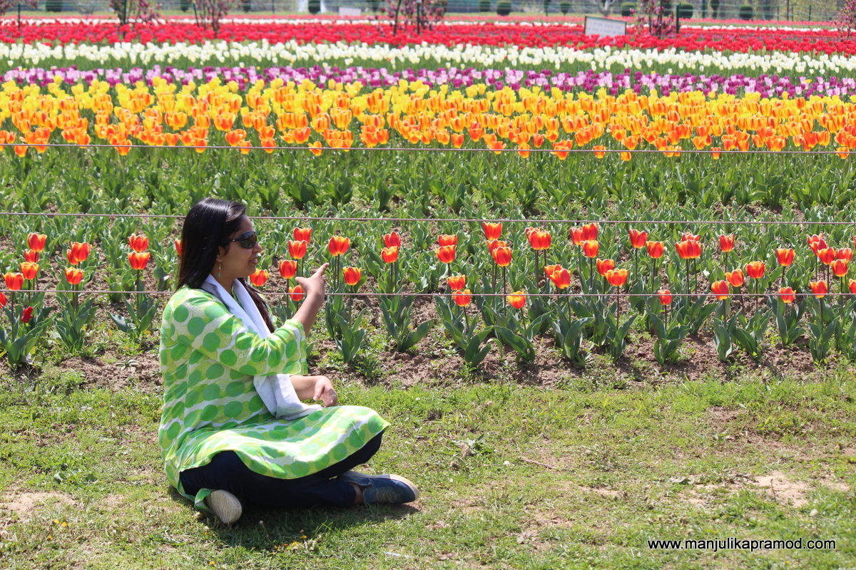 Enjoy the magnificent tulip festival of kashmir with family the kashmir valley is one of the most beautiful places in india and srinagar is among its star attractions for years i had itched to see this beautiful izmirmasajfo