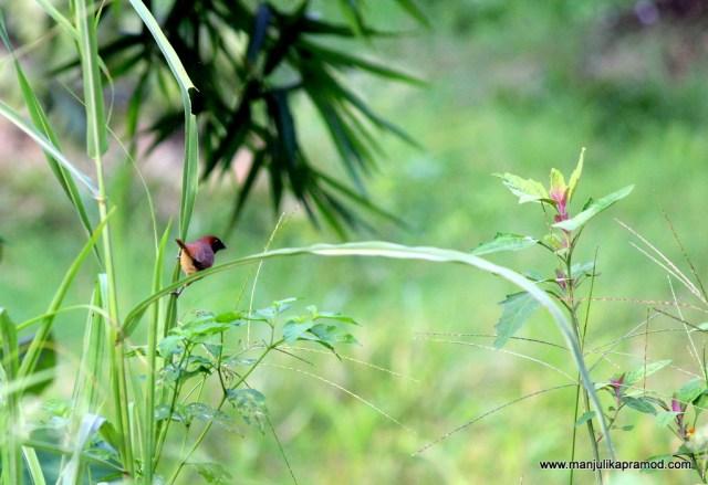 Nature, Ramnagar, Aahana resorts