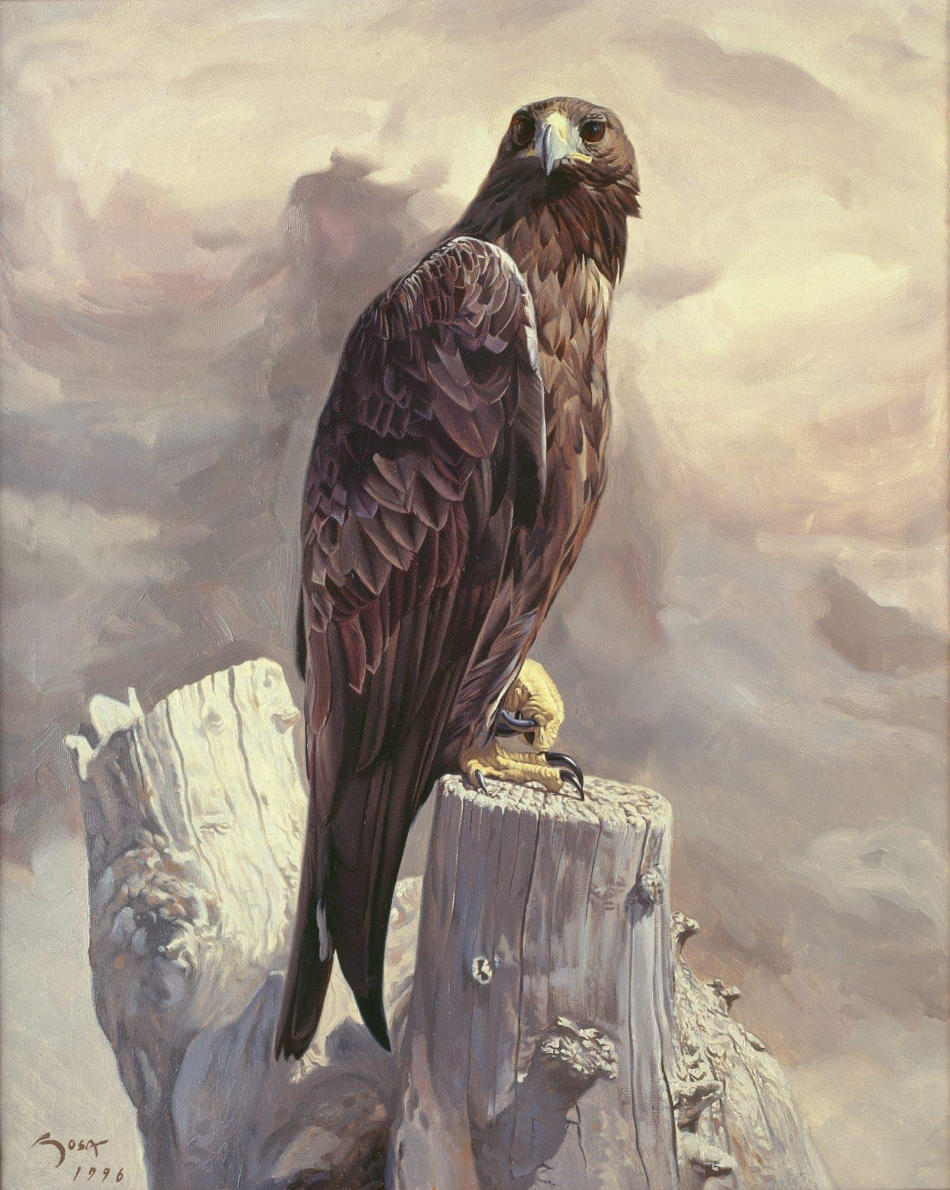 Girl Tattoo Wallpaper Eagle Cuadros De Golden Eagle Aquila Chrysaetos Golden Eagle