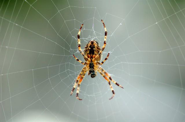 9 astuces pour éloigner les araignées