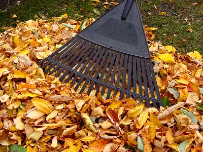Yard Cleanup Service - Call Us Today (425) 341-1265