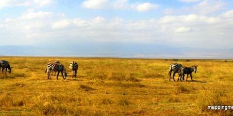 Top 5 African Animals to Spot on Safari
